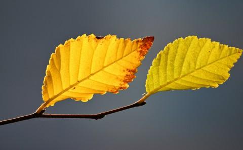 Blaetter-Herbst