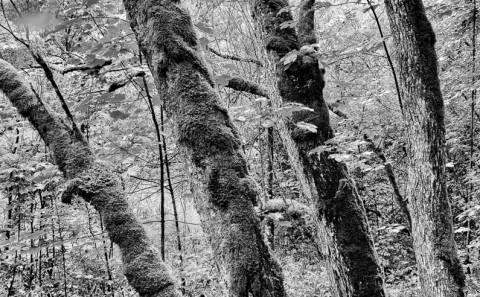 Landschaft-Fotografie-Schwarz-Weiss-Baeume-Gesaeuse-fotosalzburg