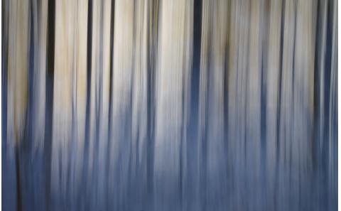 Landschaft-abstrakt-Baeume-Salzburg-fotosalzburg